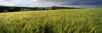Barley Field, Wales, United Kingdom von Panoramic Images