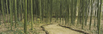 Bamboo trees on both sides of a path, Kyoto, Japan von Panoramic Images