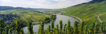 Vineyards along a river, Moselle River, Mosel-Saar-Ruwer, Germany by Panoramic Images