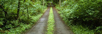 Lush foliage lining a wet driveway, Bainbridge Island, Washington, USA by Panoramic Images