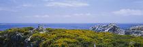 Bird Island, California, USA von Panoramic Images