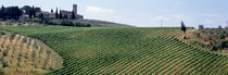 Vineyards and Olive Grove outside San Gimignano Tuscany Italy by Panoramic Images