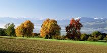 Switzerland, Swiss Midlands, pear orchard von Panoramic Images