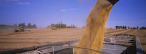 Combine harvesting soybeans in a field, Minnesota, USA by Panoramic Images