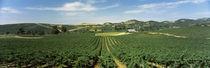Napa Valley, Napa County, California, USA von Panoramic Images