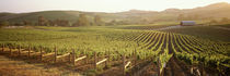 Panoramic view of vineyards, Carneros District, Napa Valley, California, USA by Panoramic Images
