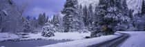 Panorama Print - Winterliche Straße, Yosemite Park, Kalifornien, USA von Panoramic Images