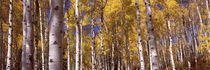 Forest, Grand Teton National Park, Teton County, Wyoming, USA von Panoramic Images