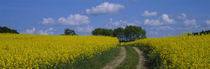 Path in a field, Germany by Panoramic Images