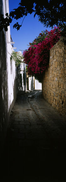 Ivy on a stonewall in an alley, Lindos, Rhodes, Greece by Panoramic Images