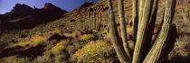Panorama Print - Organ Pipe Cactus National Monument, Arizona, USA von Panoramic Images