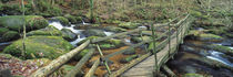 Becky Falls, Bovey Tracey, Dartmoor National Park, Devon, England by Panoramic Images
