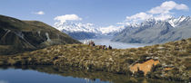 Horse Trekking Mt Cook New Zealand von Panoramic Images
