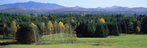 Trees in a forest, Stowe, Lamoille County, Vermont, USA by Panoramic Images