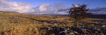 North York Moors, Yorkshire, England, United Kingdom von Panoramic Images