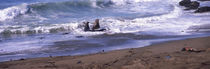 Elephant seals in the sea, San Luis Obispo County, California, USA von Panoramic Images