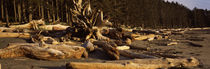 Driftwood on the beach, Washington State, USA by Panoramic Images