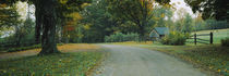 Trees at a roadside, Vermont, USA by Panoramic Images