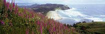 Foxgloves At Cascade Head, Tillamook County, Oregon, USA von Panoramic Images