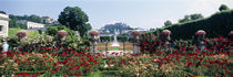 Flowers in a formal garden, Mirabell Gardens, Salzburg, Salzkammergut, Austria by Panoramic Images