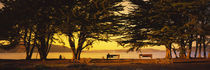 Trees In A Field, Crissy Field, San Francisco, California, USA by Panoramic Images