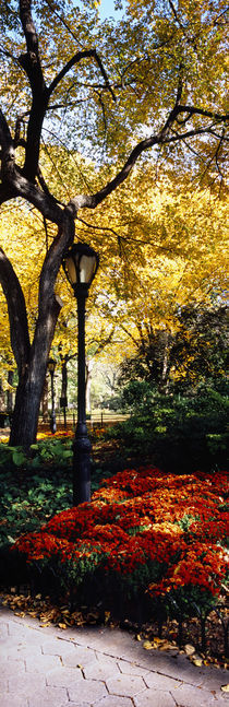 Lamppost in a park, Central Park, Manhattan, New York City, New York, USA by Panoramic Images