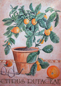 CITRUS RUTACEAE by Roland H. Palm