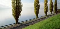 Trees along a lake, Lake Zug, Switzerland by Panoramic Images