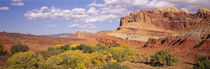 Orchards in front of sandstone cliffs, Capitol Reef National Park, Utah, USA von Panoramic Images