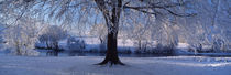 Winter Trees Perkshire Scotland von Panoramic Images