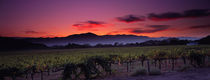 Panorama Print - Sonnenuntergang auf Weingut, Napa Valley, Kalifornien, USA von Panoramic Images