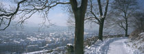 Breisgau, Baden-Württemberg, Germany von Panoramic Images