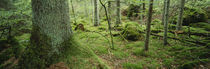 Close-up of moss on a tree trunk in the forest, Siggeboda, Smaland, Sweden by Panoramic Images