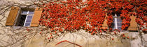 Germany, Tuebingen, Red leaves grown on the walls