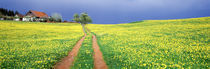 Dirt road passing through a field, Germany by Panoramic Images