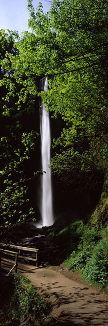 Waterfall in a forest, Columbia River Gorge, Oregon, USA von Panoramic Images