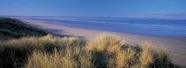 Tall grass on the coastline, Saunton, North Devon, England von Panoramic Images