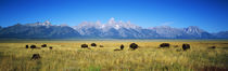 Grand Teton National Park, Wyoming, USA von Panoramic Images
