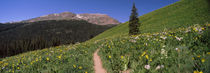 Crested Butte, Gunnison County, Colorado, USA von Panoramic Images