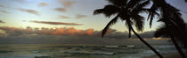 Palm trees on the beach, Hawaii, USA by Panoramic Images