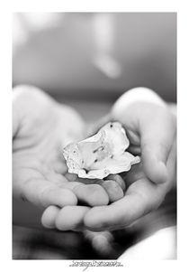 Gentle  von sarajean-photography