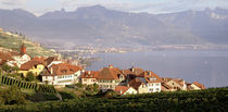 Rivaz, Lavaux, Vaud, Switzerland by Panoramic Images