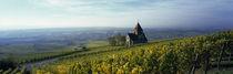 Rheinhessen, Rhineland-Palatinate, Germany by Panoramic Images