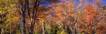 Trees in autumn, Vermont, USA von Panoramic Images