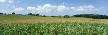 Corn Crop In A Field, Wyoming County, New York State, USA by Panoramic Images