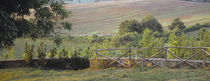 Fence in a vineyard, Barbaresco DOCG, Piedmont, Italy by Panoramic Images