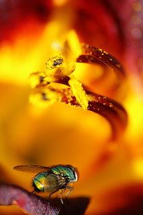 Dive in fire by Szymon Gackowski