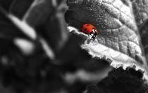 Ladybug love. by Sally Nelsen