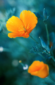 beauty flowers under the sunlight by Dmytro Tolokonov