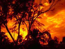 Firey Southern Sky von Yvonne M Remington